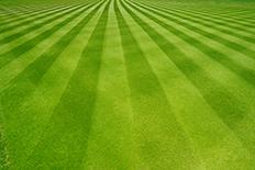 Freshly mowed grass in clear cut vertical rows
