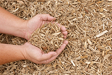 Person holding freshly cut wood chips in their hands over a larger pile of wood chips
